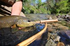 Zbliżenie brown pstrąg ryba Zdjęcia Royalty Free
