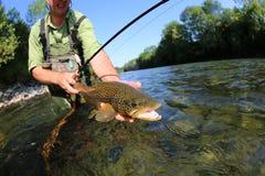 Zbliżenie brown pstrąg w rybak rękach Obraz Royalty Free