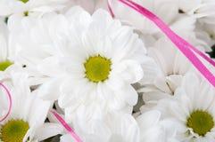 Zbliżenie chamomile Obraz Royalty Free