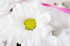 Zbliżenie chamomile Fotografia Stock