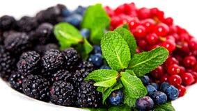 Zbliżenie cranberries, czarne jagody i morwy, Fotografia Royalty Free