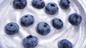Zbliżenie czarne jagody w naturalny jogurtu wirować Bezszwowy looping, Owocowy tło Obraz Stock