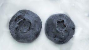 Zbliżenie czarne jagody w naturalny jogurtu wirować Bezszwowy looping, Owocowy tło Obraz Royalty Free