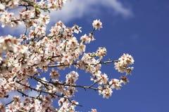 Bonkrety drzewo Przeciw niebu Zdjęcie Royalty Free