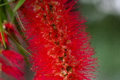 Zbliżenie czerwony kwiat na ogródzie obraz stock