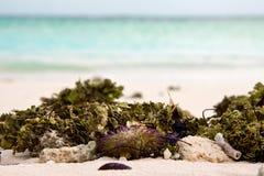 Zbliżenie denna świrzepa, skorupy i denny czesak przy białym piaskiem, wyrzucać na brzeg i lampas błękitna woda morska Zdjęcia Stock