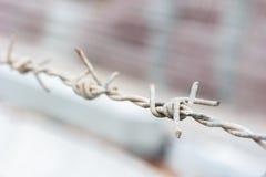 Zbliżenie drutu kolczastego ogrodzenie, wybrana ostrość. Fotografia Royalty Free