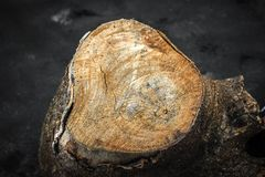 Zbliżenie Drzewny bagażnik obraz stock