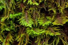 Zbliżenie drzewny mech w las tropikalny fotografia royalty free