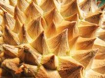 Zbliżenie durian owoc skóra zdjęcia royalty free