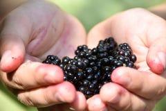 Zbliżenie dziecka ` s ręki mienia czarne jagody Zdjęcie Stock