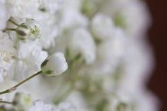 Zbliżenie dziecko oddechu kwiaty obraz stock