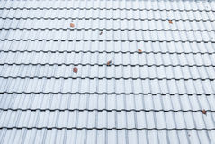 Zbliżenie Falisty kształt Dachowej płytki tło Zdjęcie Stock