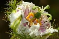 Zbliżenie fotografia dzicy kwiaty Obrazy Royalty Free