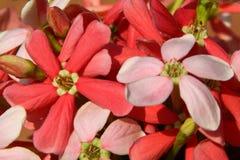 Zbliżenie fotografia dzicy kwiaty Obraz Stock