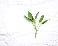 Zbliżenie gałęziasta świeża mędrzec opuszcza na białym drewnianym tle A Fotografia Stock