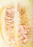 Zbliżenie Galia melon zdjęcie stock