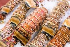 Zbliżenie homara świezi ogony obrazy royalty free