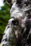Zbliżenie horse& x27; s oko fotografia stock