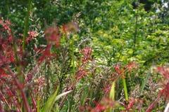 Zbliżenie i szczegół na trzonach i sprig zielone trawy obraz royalty free