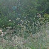 Zbliżenie i szczegół na wysokiej trawie w dzikim ogródzie obraz stock