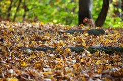 Zbliżenie jesień ślad zdjęcia royalty free
