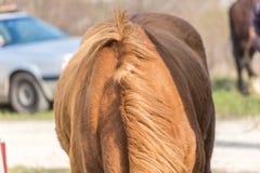 Zbliżenie końska grzywa Obrazy Royalty Free