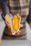 Zbliżenie kobiety ręki mienia kukurudza na cob w swój plewie Obraz Stock