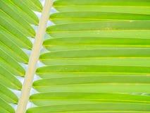 Zbliżenie kokosowy liścia wzór, tło i Obraz Stock