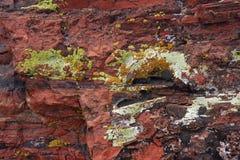 Zbliżenie kolorowy liszaj na osłupiałym drewnie zdjęcie royalty free