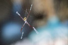 Zbliżenie kolorowy pająk na pajęczynie z kopii przestrzenią fotografia royalty free