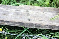 Zbliżenie komarnica na łamanym ogrodzeniu Obraz Royalty Free