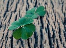 Zbliżenie koniczyn liści ustawianie na drewnianym Zdjęcie Stock