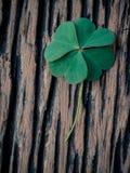 Zbliżenie koniczyn liści ustawianie na drewnianym Obraz Stock