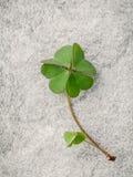 Zbliżenie koniczyn liście na Kamiennym tle Symboliczny Zdjęcie Stock