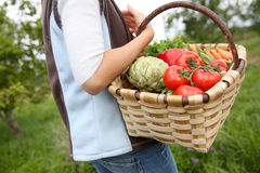 Zbliżenie kosz z świeżo zbierającymi warzywami obraz stock