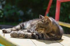 Zbliżenie kota lying on the beach na słonecznym dniu Zdjęcia Stock