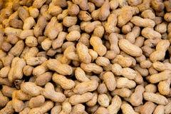 Zbliżenie krótkopęd arachidy Obraz Stock