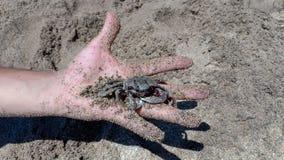 Zbliżenie krab na ręce w piasku zdjęcie stock