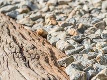 Zbliżenie krakingowy drewniany i żwir tło Fotografia Royalty Free