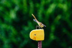Zbliżenie który przygotowywa dragonfly zdejmował zdjęcia royalty free