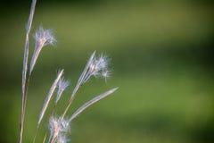 Zbliżenie kwiat na kolorowej łące Zdjęcie Royalty Free