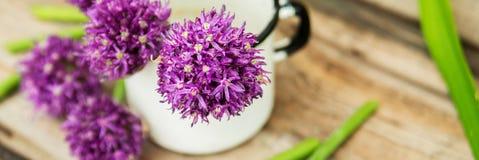 Zbliżenie kwiatonośni szczypiorki z płytką głębią pole i ostrość koncentrował na kwiacie w przedpolu zdjęcie royalty free