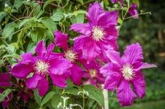 Zbliżenie Kwitnąć kwiat w świacie roślina obraz royalty free