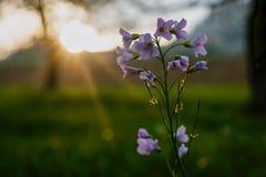 Zbliżenie kwitnie podczas zmierzchu obraz stock