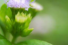 Zbliżenie kwitnie w naturze je miękka ostrość dla tła pojęcia Zdjęcia Royalty Free