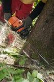 Zbliżenie leśny pracownika rozcięcie przez drzewa z piłą łańcuchową zdjęcia stock