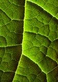 zbliżenie liści, Zdjęcie Royalty Free