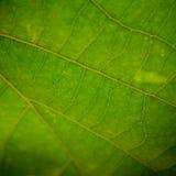 zbliżenie liści, Obrazy Stock