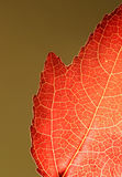 zbliżenie liści pomarańcze Obrazy Stock